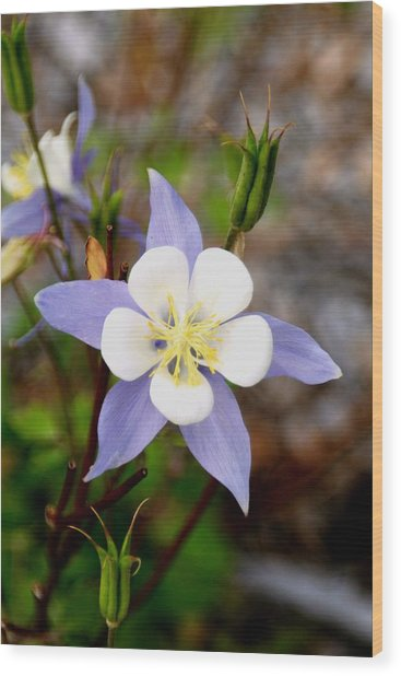White And Purple Wood Print