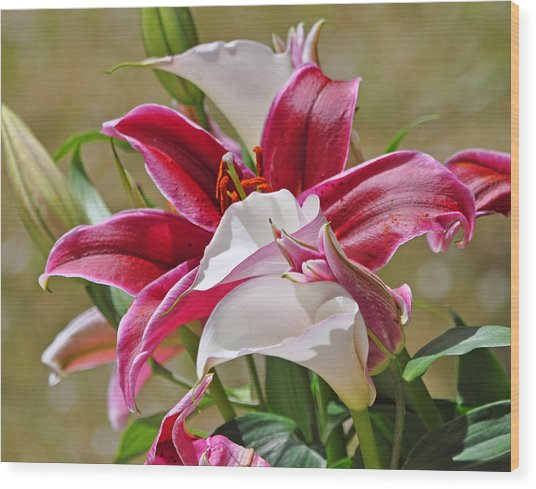 White And Red Lilies Wood Print