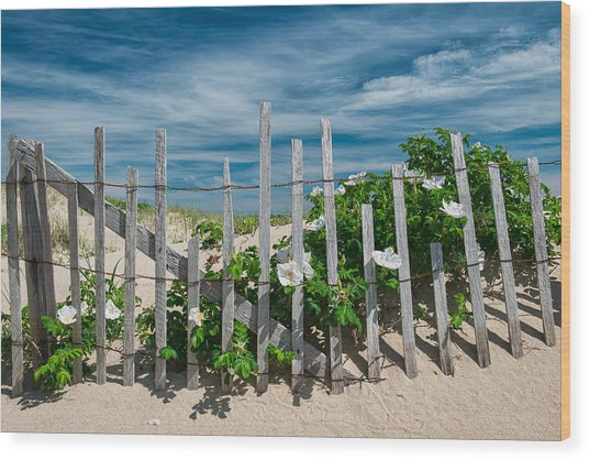 White Beach Roses Wood Print