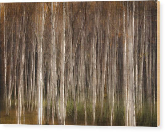 White Birch Abstract Wood Print