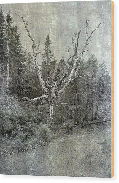 White Birch Last Statement  Wood Print