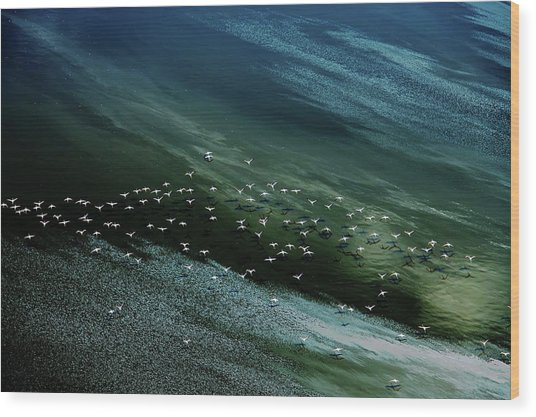 White Birds, Blue And Green Water Wood Print by Hao Jiang
