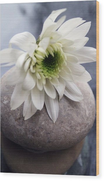 White Blossom On Rocks Wood Print