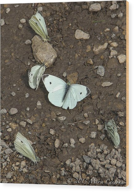 White Cabbage Butterflies Wood Print by Marie  Cardona