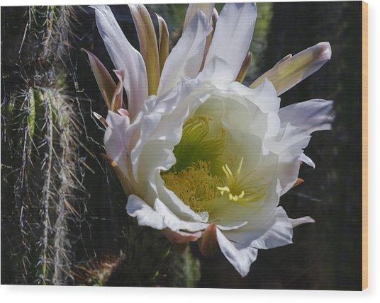 White Cactus Bloom Wood Print