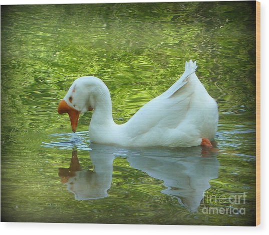 White Chinese Goose Curtsy  Wood Print