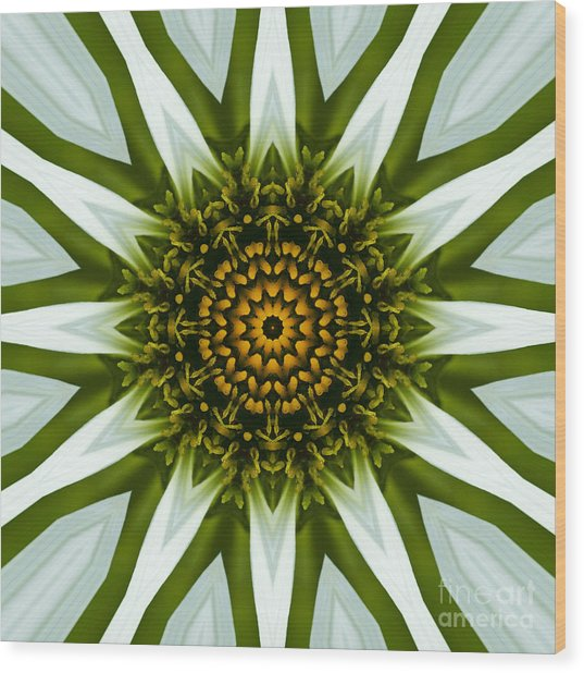 White Coneflower Mandala 12 Wood Print