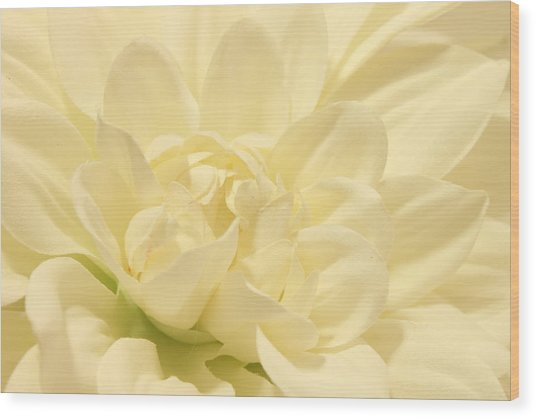 White Dahlia Dreams Wood Print