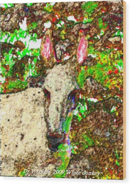 White Donkey-owner Of Hills Wood Print by Dr Loifer Vladimir