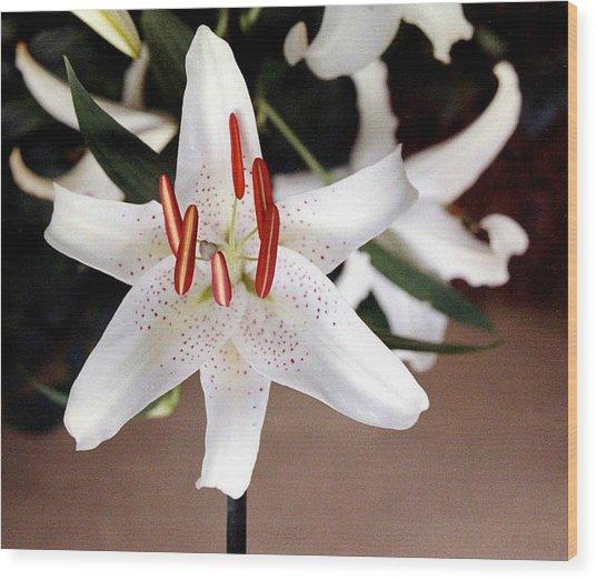 White Oriental Lily Wood Print