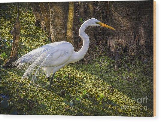 White Egret On The Hunt Wood Print