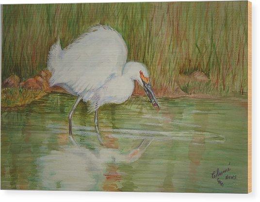 White Egret Wading  Wood Print