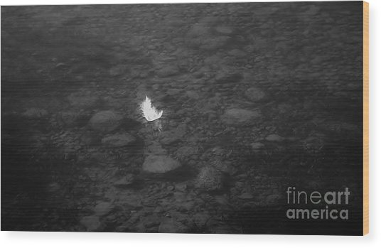 White Feather Wood Print by Michelle O'Neill