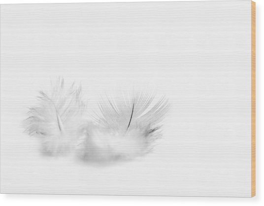 White Feathers Wood Print