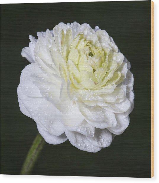 White Flower Wood Print by Arnar B Gudjonsson