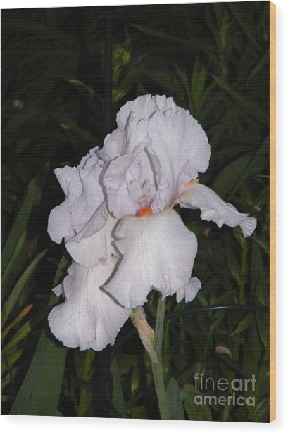 White Flower At Night Wood Print