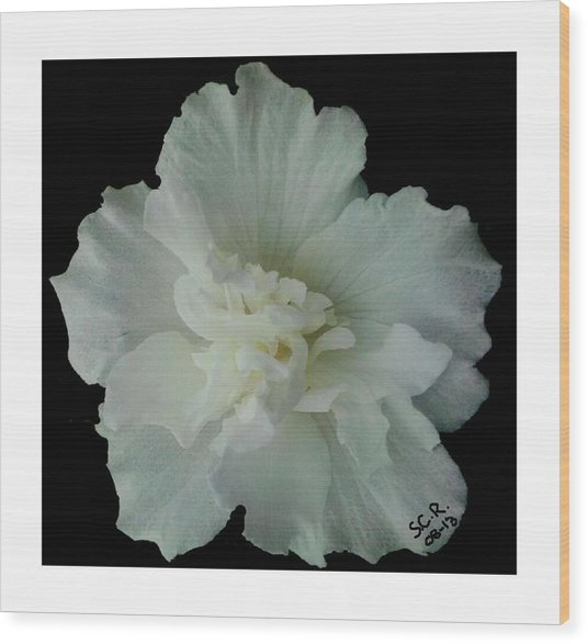 White Flower By Saribelle Rodriguez Wood Print