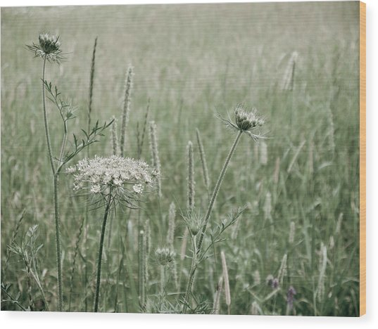 White Flower In A Meadow Wood Print