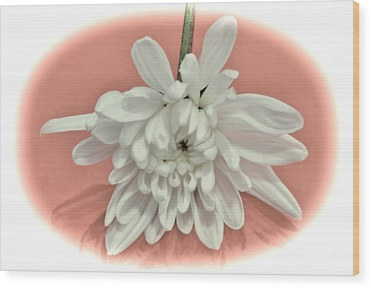 White Flower On Pale Coral Vignette Wood Print