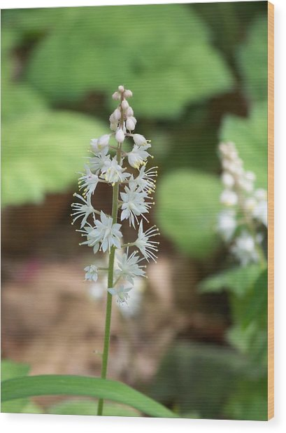 White Flowers Wood Print by Brittany Gandee