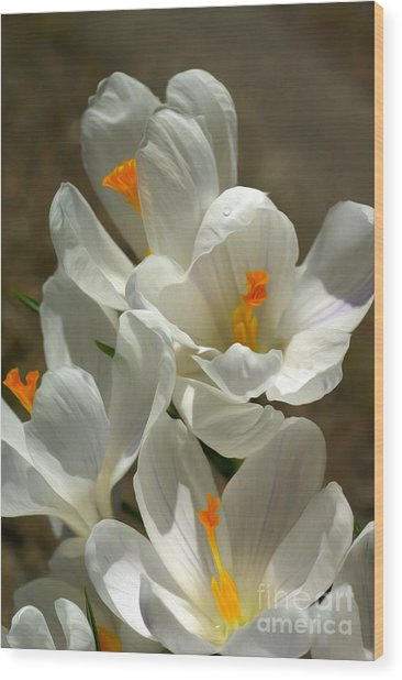 White Flowers Wood Print by Nur Roy