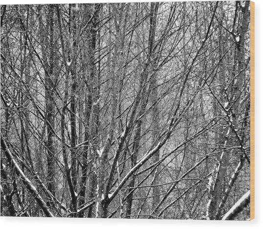 White Forest Wood Print
