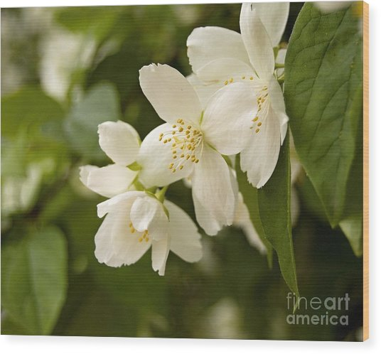 White Garden I Wood Print