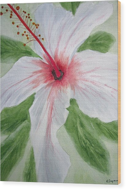 White Hibiscus Flower Wood Print