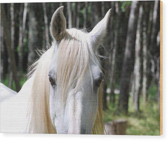 Wood Print featuring the photograph White Horse Close Up by Jocelyn Friis