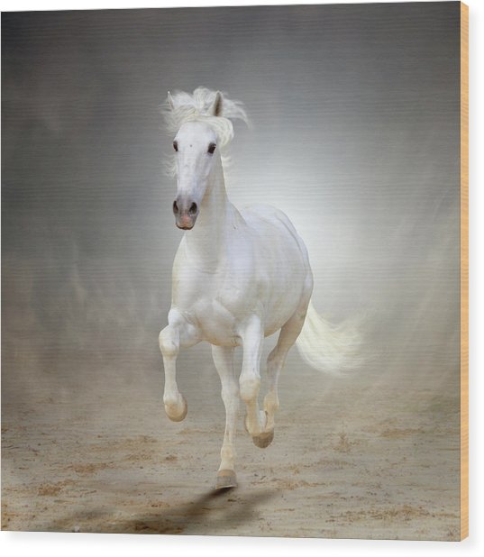 White Horse Galloping Wood Print by Christiana Stawski