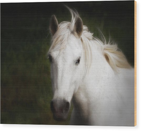 Wood Print featuring the photograph White Horse Of The Carmargue by Gigi Ebert