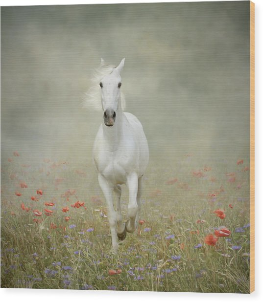White Horse Running Through Poppies Wood Print by Christiana Stawski