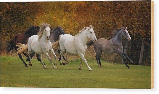 White Horse Vale Lipizzans Wood Print