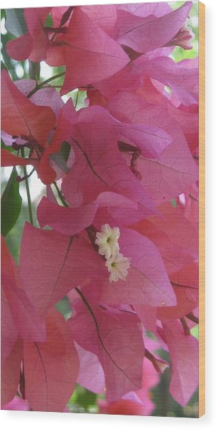 White In Pink Wood Print by Russell Smidt
