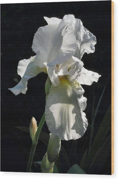 White Iris In The Morning Wood Print