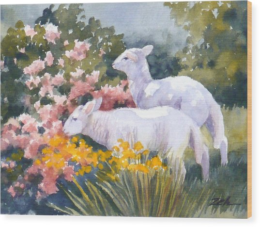 White Lambs In Scotland Wood Print