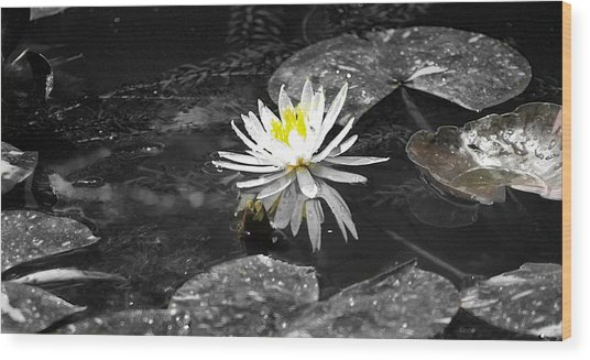 White Lilly Wood Print