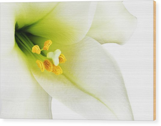 White Lilly Macro Wood Print