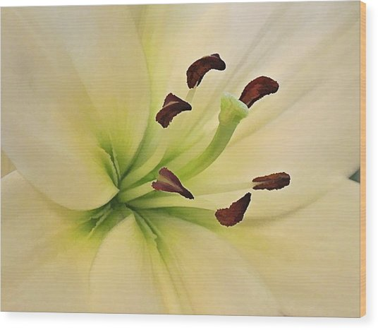White Lily Pp-6 Wood Print