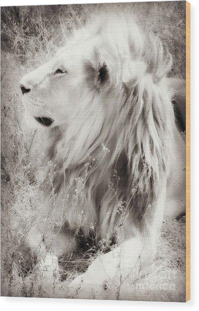 White Lion Wood Print