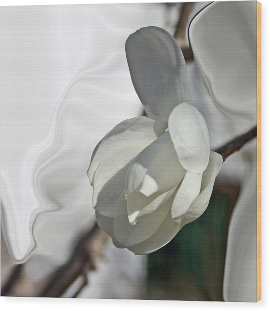 White Magnolia Series 510 Wood Print