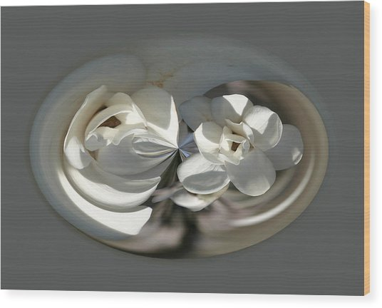 White Magnolia Series 511 Wood Print