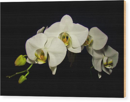 White Orchid II Wood Print