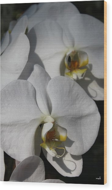 White Orchid Wood Print by Mark Steven Burhart