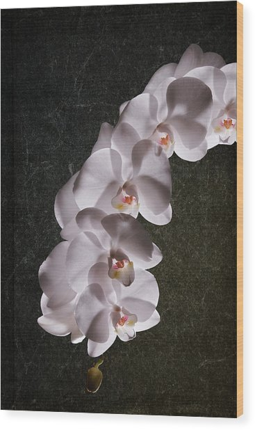 White Orchid Still Life Wood Print