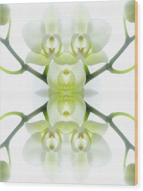 White Orchid With Stems Wood Print by Silvia Otte
