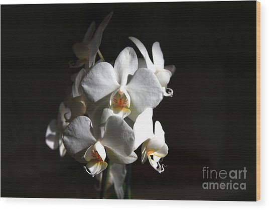 Wood Print featuring the photograph White Orchids by Jeremy Hayden