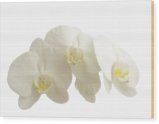 White Orchids On White Wood Print