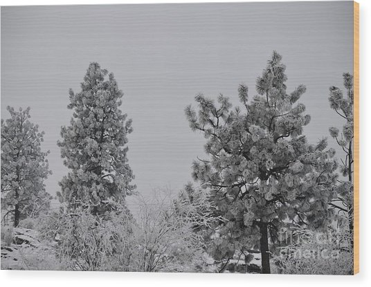 White Out Wood Print by Greg Patzer