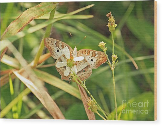 White Peacock Butterfly On Wild Daisy Wood Print